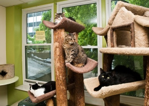 Tree House Humane