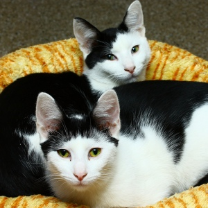 Cat Guardians - An All-Volunteer Cat Shelter
